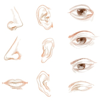 Hand zeichnen skizze der menschlichen biologie organe set anatomie