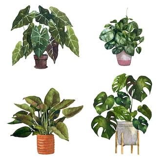 Handbemalte aquarell-zimmerpflanzenpackung