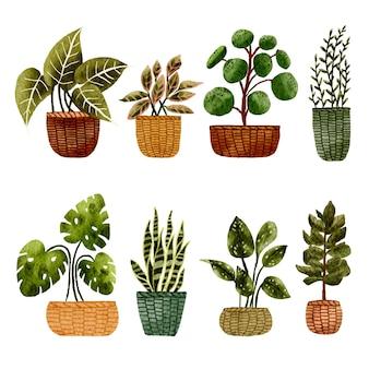 Handgemalte aquarell tropische zimmerpflanze set illustration
