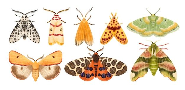 Handgemalte illustrationssammlung des mottenschmetterlingsaquarells