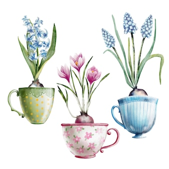 Handgemalter aquarellsatz primeln in teetassen