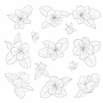 Handgezeichnete apfelblüte