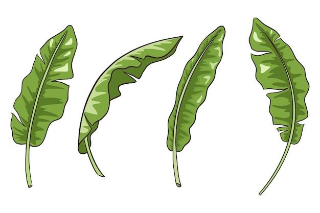 Handgezeichnete bananenblätter-sammlung. exotisches laubset. tropische botanikelemente für logo, kosmetik, spa, embleme, aufkleber und drucke, schönheitspflegeprodukte. premium-vektor