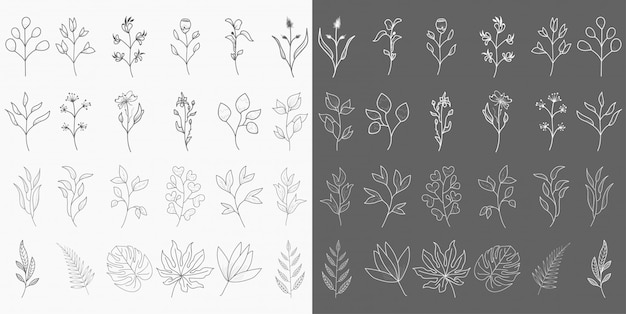 Handgezeichnete botanische elemente