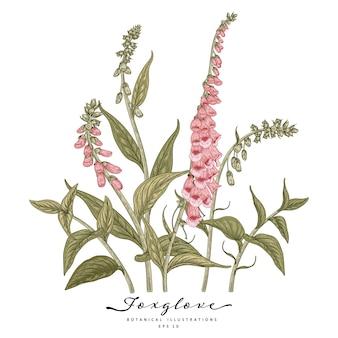 Handgezeichnete botanische illustrationen der fingerhutblume