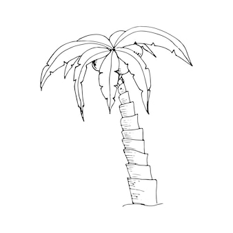 Handgezeichnete doodle palme skizze monochromes gestaltungselement tropische natur kokospalme