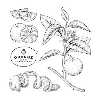 Handgezeichnete elemente der orangenzitrusfrucht.
