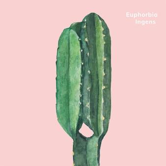Handgezeichnete euphorbien ingens kandelaber baum