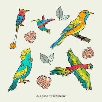 Handgezeichnete exotische vögel sammlung