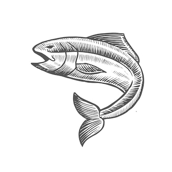 Handgezeichnete fisch vektor