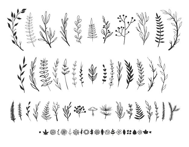 Handgezeichnete florale elemente isoliert auf weißem vektorblumenblätter kräuter und pflanzen