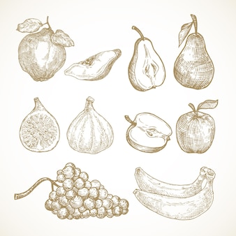 Handgezeichnete früchte vektor illustrationen sammlung äpfel birnen quitte feigen trauben und bananen skizze...