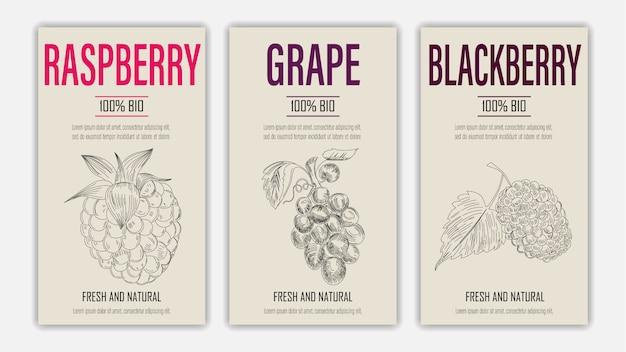 Handgezeichnete früchte von himbeer-, trauben- und brombeerplakaten. weinleseartiges gesundes nahrungsmittelkonzept.