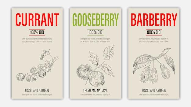 Handgezeichnete früchte von johannisbeer-, stachelbeer- und berberitzenplakaten. weinleseartiges gesundes nahrungsmittelkonzept.