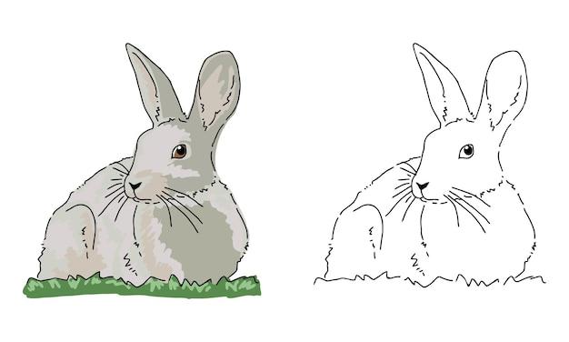 Handgezeichnete kaninchen-malvorlagen für kinder