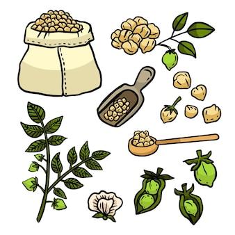 Handgezeichnete kichererbsenbohnen und pflanzenillustration