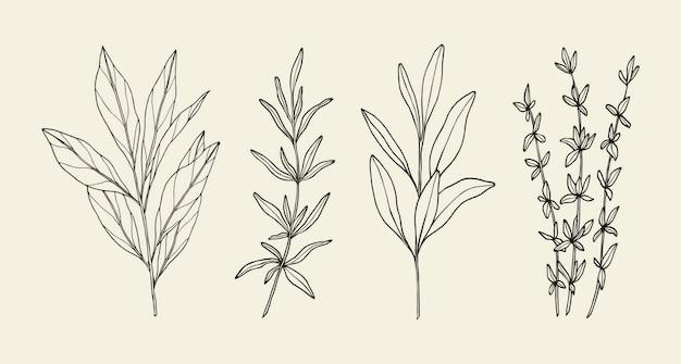 Handgezeichnete küchenkräuter und pflanzen
