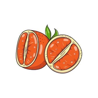 Handgezeichnete mandarinen auf weißem hintergrund.