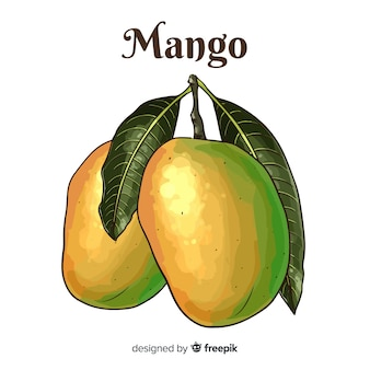 Handgezeichnete mango