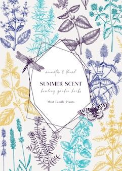 Handgezeichnete münz- und balsamkarte. pfefferminzpflanzen und insekten. heilkräuter und sommerblumen.