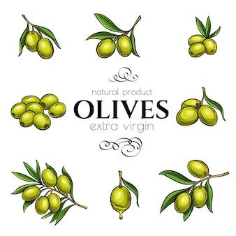 Handgezeichnete oliven einstellen