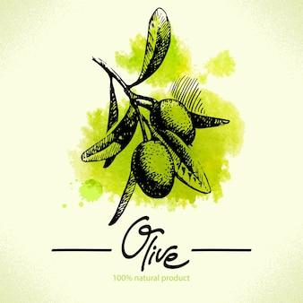 Handgezeichnete olivenillustration mit aquarellrücken