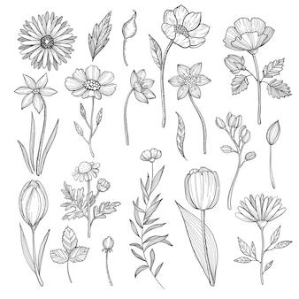 Handgezeichnete pflanzen. vektorabbildungisolat auf weiß