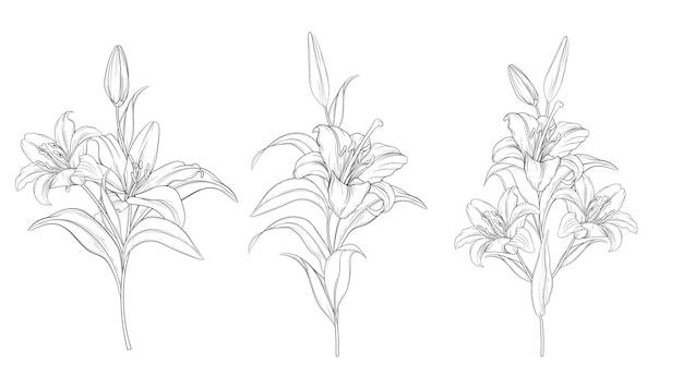 Handgezeichnete schöne lilie blumensträuße