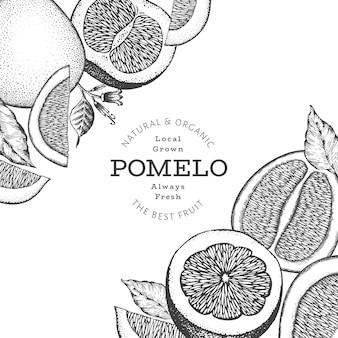 Handgezeichnete skizze stil pomelo