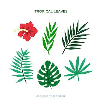 Handgezeichnete tropische blumen und blätter zu packen