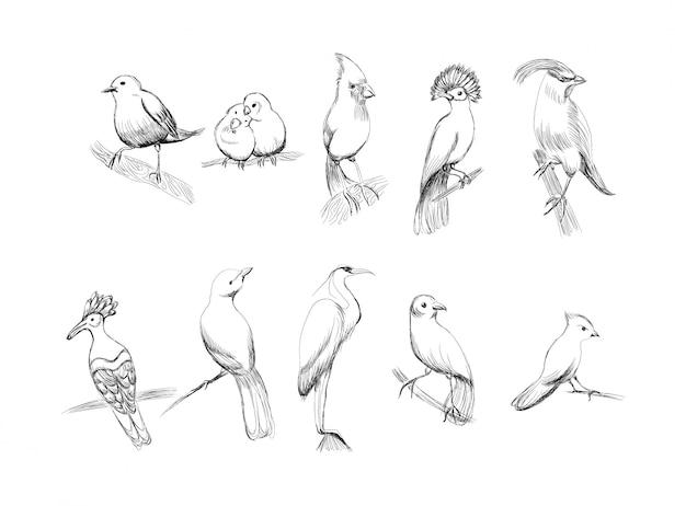 Handgezeichnete vögel festgelegt