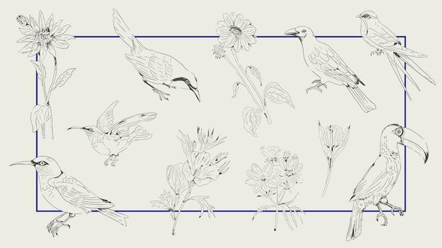 Handgezeichnete vogel- und blumensammlung auf einem rahmenhintergrundvektor