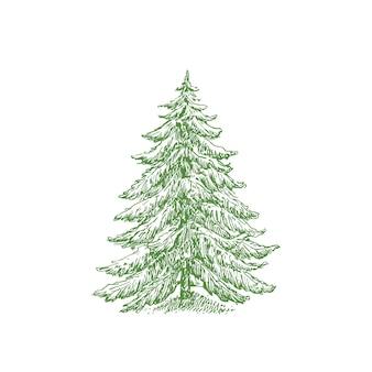 Handgezeichnete weihnachtsbaum farbe vektor-illustration. abstrakte kiefernskizze. winterurlaub gravur stil zeichnung. isoliert.