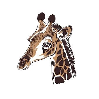 Handgezeichnete weinleseart-skizzenillustration des giraffengesichtsporträts