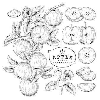 Handgezeichneter apfelfruchtelementsatz