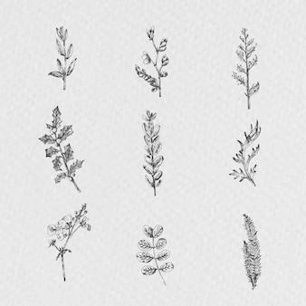 Handgezeichneter pflanzensammlungsvektor