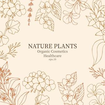 Handgezeichneter rahmen für ätherische ölpflanzen