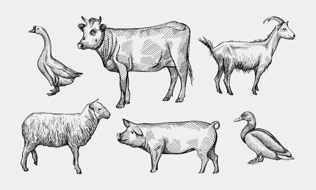 Handgezeichneter skizzensatz von nutztieren. vieh. haustiere. schwein, weiße gans mit langem hals, ente, schaf, ziege