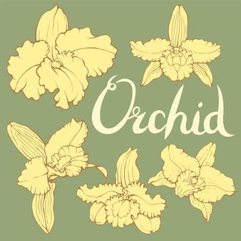 Handgezeichneter vektor von dendrobium-orchideenblüten mit schriftzug auf grünem hintergrund