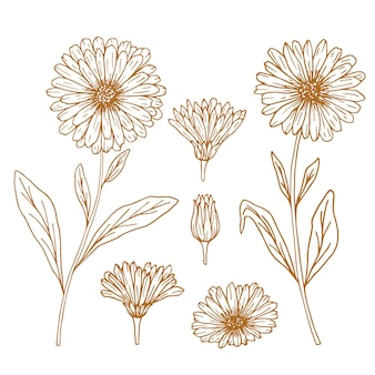 Handgezeichnetes set von ringelblumenblüten