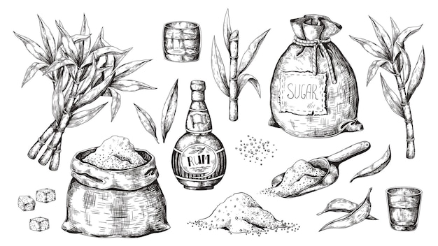 Handgezeichnetes zuckerrohr und rum. vintage schnapsflasche und gläser, zuckersack und würfel, zucker bio-pflanzen. graviertes alkoholisches getränk.