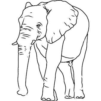 Handskizzierter, handgezeichneter elefanten-vektor