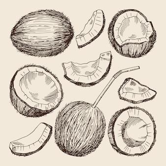 Handzeichnungsabbildungen der verschiedenen seiten der kokosnuss.