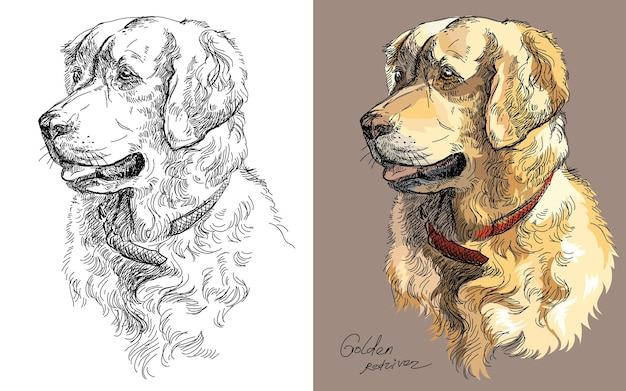 Handzeichnungskopf des golden retriever-hundes. vektor lokalisierte bunte und einfarbige illustration.