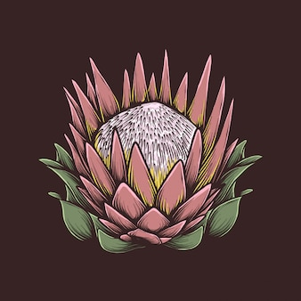 Handzeichnungsweinlese protea-blumenvektorillustration