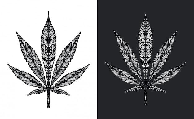 Hanf oder marihuana verlässt vektorskizze