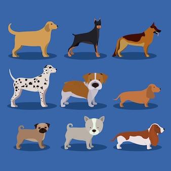 Haustiere design