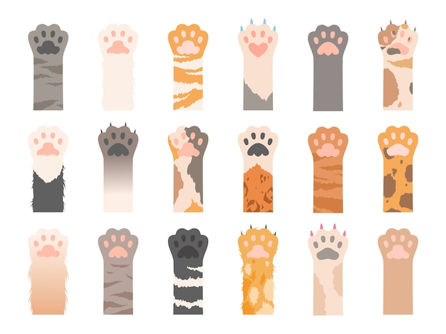 Haustiere pfote. verschiedene pfoten der wildkatzen mit krallensammlung. farbige haustierpfote mit klaue, tierkatzenfußillustration