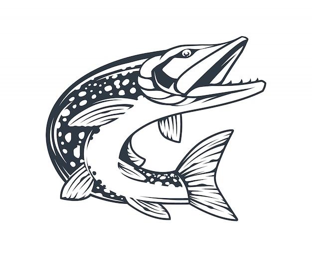 Hechtfisch in bewegung mit offenem mund lokalisiert auf weiß. monochrome vektorätzstilkunst.