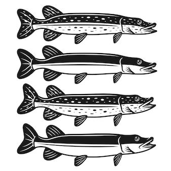 Hechtfischsatz von vier stilen detaillierte monochrome illustration